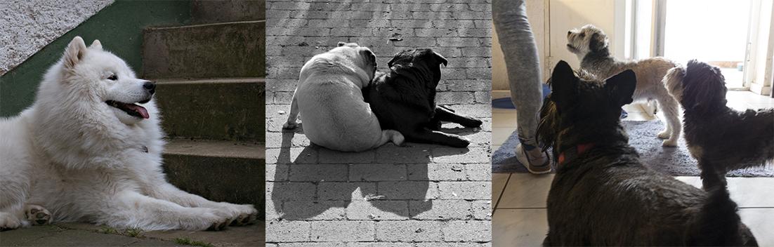Hunde_9.jpg